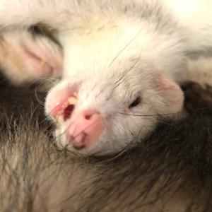 ミントの寝顔
