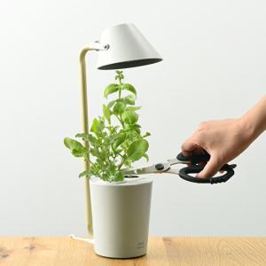 土不要で簡単クリーン!ライトとしても使える便利な2Way!BRUNOブルーノ 水耕栽培キット STAND BY GREEN
