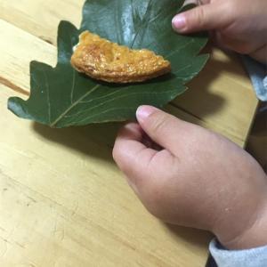 一歳息子、柏餅の葉っぱの使い道。