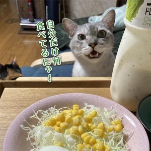 対面からのロックオン猫 【動画あり】