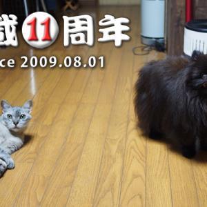 【祝】 熊猫犬日記 11周年