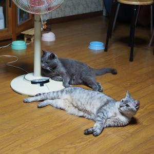 3匹の保護猫たちの現在地 【前編】
