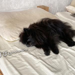 謎のベッドシェア生活