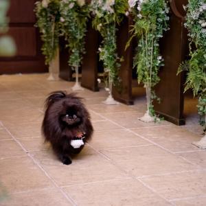 リングドッグ真熊 ~結婚式ララバイ⑧