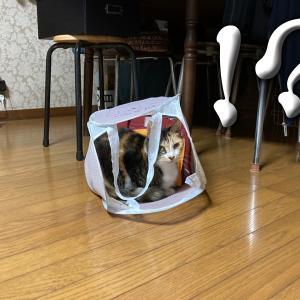 洗濯カゴの魅力 ~猫の隠れた習性