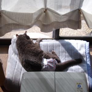最後の朝 石像猫にいなの最期 <Vol.1>