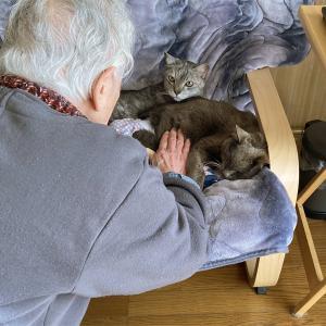 動物たちが無反応の不思議 石像猫にいなの最期 <Vol.3>