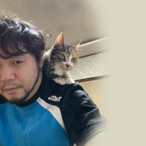 肩乗り猫の甘え攻勢