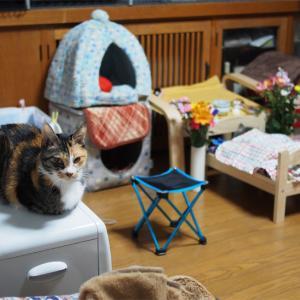動物たちのお別れ作法 石像猫にいなの最期 <Vol.7・最終章>