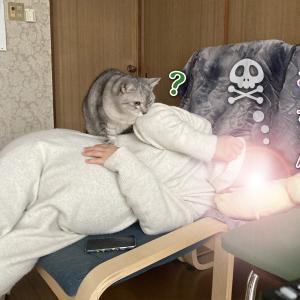 鈍感猫の無法者ぶり