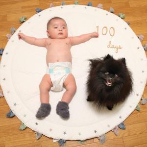 小倅の生後100日