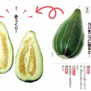 日本語探訪(その21) 慣用句「瓜二つ」