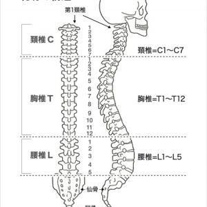 腰痛予防、改善に体幹トレーニング