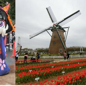 チューリップと風車の観光名所、千葉県佐倉市とカムロちゃんの思い出