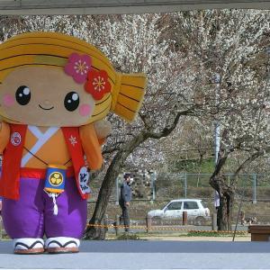 茨城県水戸市の観光名所、偕楽園の梅と「みとちゃん」写真集
