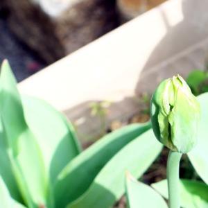 被子植物の花はどのようにして形成されるか、分子遺伝学的な理解について書いてみる