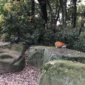山田池公園の猫たち〜コロナ禍の世界を淡々と楽しく生きるシリーズ〜