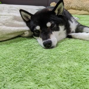 今日は夕方散歩は中止です。