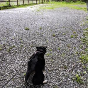 雨でも!きなこは元気です。