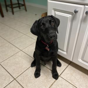 5ヶ月の愛犬ができるようになったこと