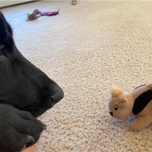 愛犬の新しい友達