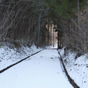定義森林鉄道跡の廃木橋群 その2