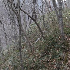 定義森林鉄道跡の廃木橋群 その4