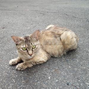 イオンタウン鴨方の、野良猫。店は困ってるみたい。