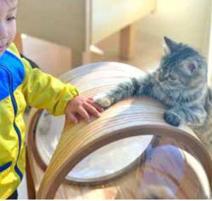 アリオ倉敷に猫カフェがオープン!【Moff animal cafe(モフアニマルカフェ)】