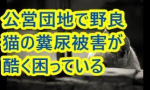 公営団地で野良猫の糞尿被害が酷く困っている