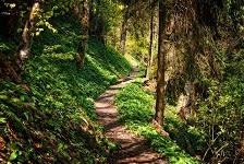細い道を歩いて行くのか~