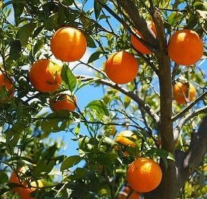 黄色かオレンジっていう感じ~