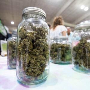 【研究】新型コロナの死因となる重篤な肺炎に大麻の有効成分「THC」が効果、動物実験で100%が生存・・・!