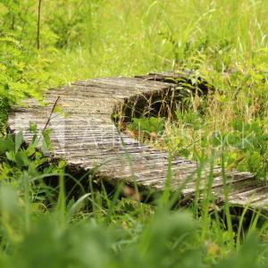 埋もれたベンチ。