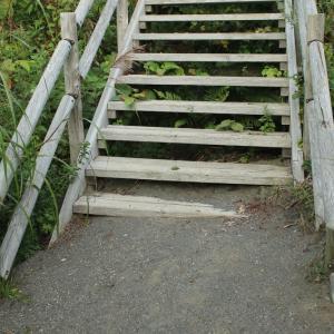 埋もれた登山道
