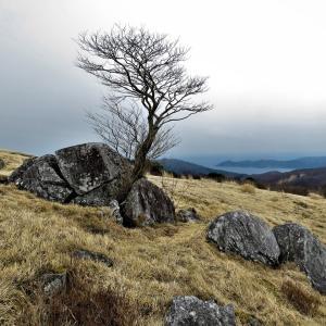 岩を割る木