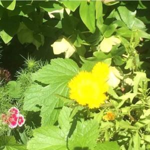 黄色と革のスカート! 2012年「ガンズ・アンド・ローゼズ」ロックの殿堂入り