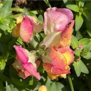 リップカラー【Crazy 】【Kiss from a Rose 】Seal シールのこの2曲