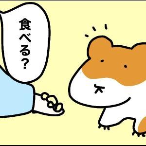 4コマ漫画 「ほおぶくろ」