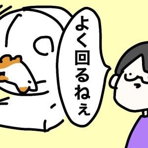 4コマ漫画 「まわしぐるま」