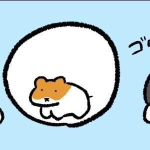 4コマ漫画「ハムスターボール」