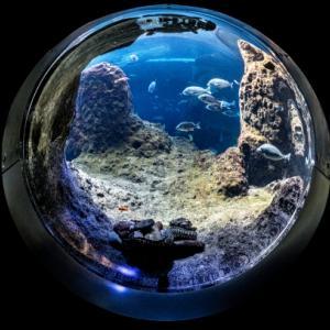 四国水族館の入場料金やイルカショーの時間は?お土産や混雑状況についても調査!