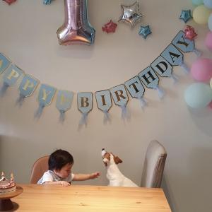 1歳を迎えた息子ともうすぐ4歳のジャックラッセル。