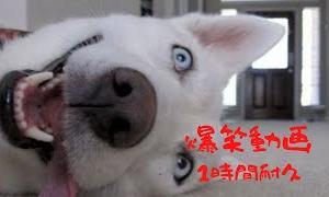 【爆笑】笑ったら負け!面白動物100連発耐久動画【1時間耐久】