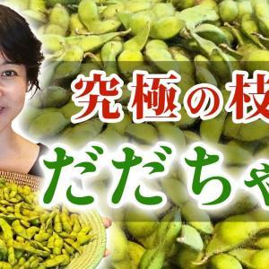 【重大告知あり!!】枝豆の王様、自然農法で育った最高級の白山だだちゃ豆を食べよう!【美味しい茹で方】