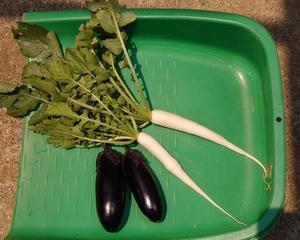 畑から茄子、ダイコンそしてマイブーム