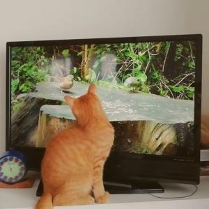 猫が夢中になる動画