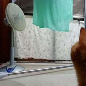 初めての扇風機