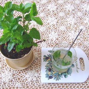 【ざおうハーブ】モヒートミントで作る夏におすすめの飲み物とバジル摘み体験
