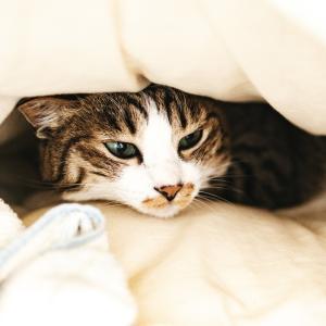 【ベットの位置】寝室風水【開運】